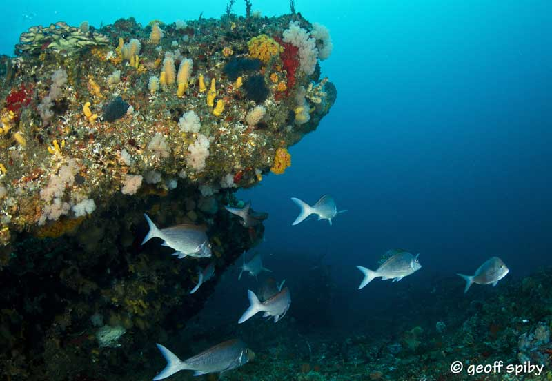 Protea-Banks_diving_South_Africa_diving_001