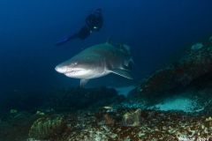 _1_Atlantis-reef_geoff_spiby_diving_South_Africa_diving_001