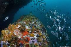 Atlantis-reef_diving_South_Africa_diving_001