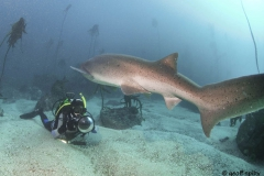 _Atlantis-reef_geoff_spiby_diving_South_Africa_diving_001