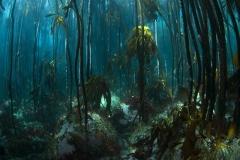 Dive_south_AfricaAtlantis-reef_geoff_spiby_009.1