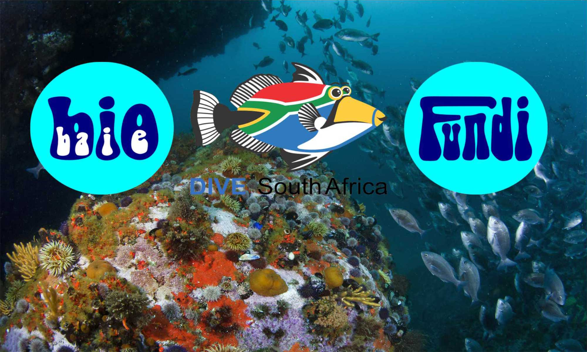 Dive South Africa